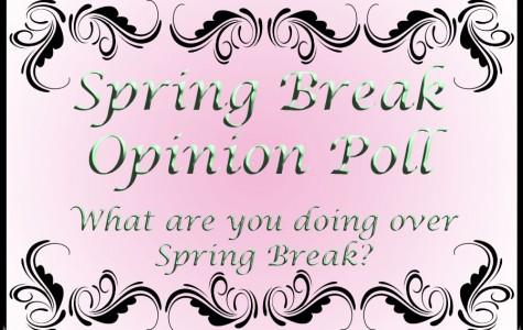 Spring Opinion