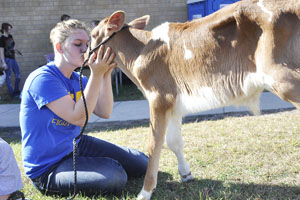 Angel Kasper gives this calf a kiss on the nose