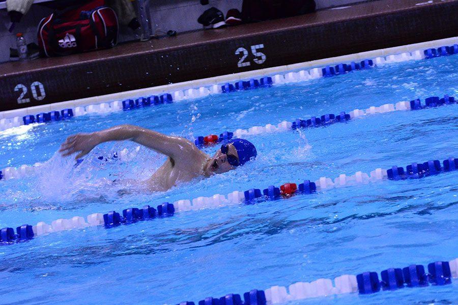 Freshmen Logan Steckelberg swimming the 50 yard freestyle