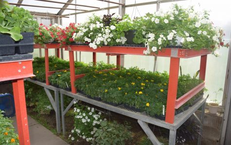 The annual OHS plant sale