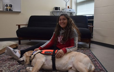 Trooper,– a paw-sitive change for OHS